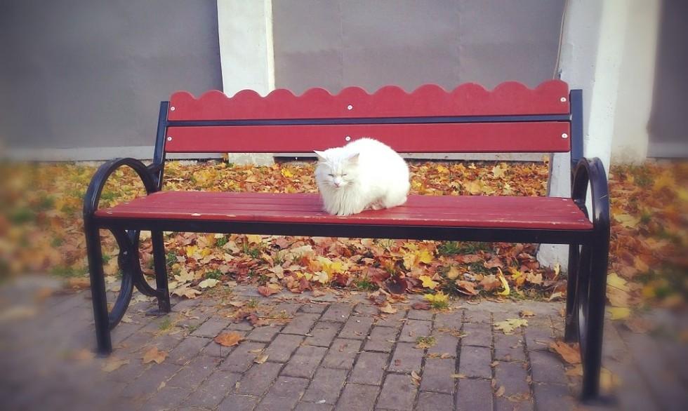 Скамейка в Кронштадте Фото kronnews.ru