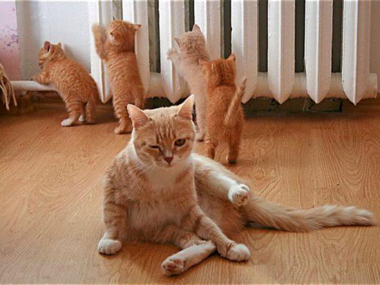 коты и батареи